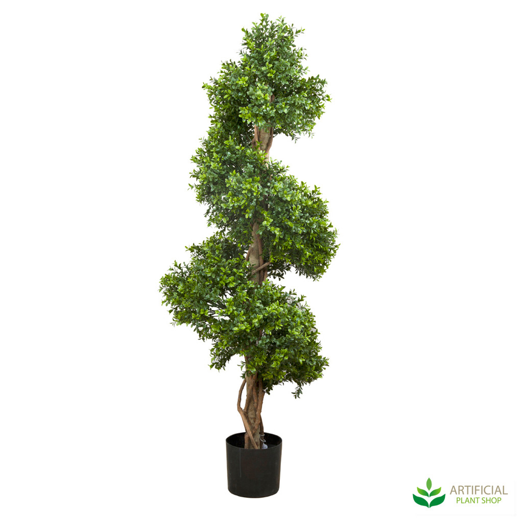 Boxwood Spiral Tree 1.5m