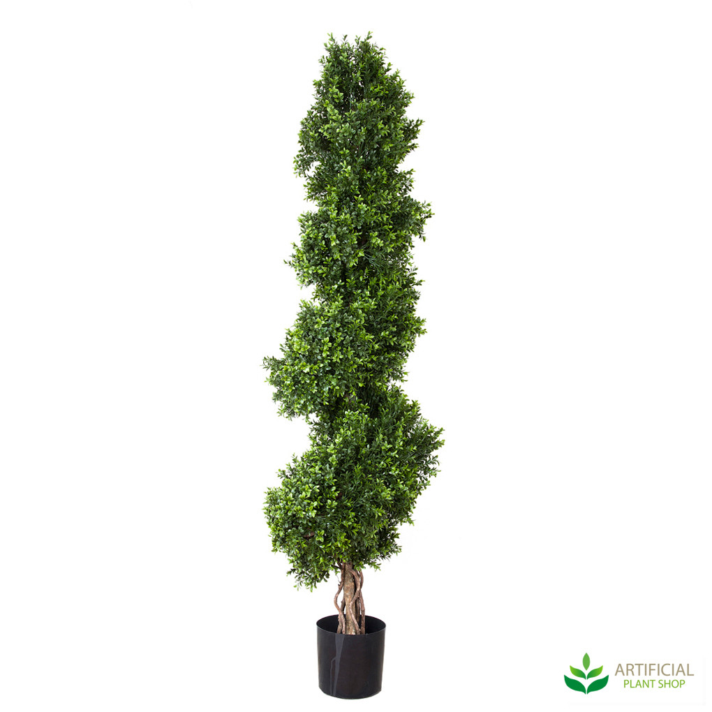 Boxwood Spiral Tree Topiary