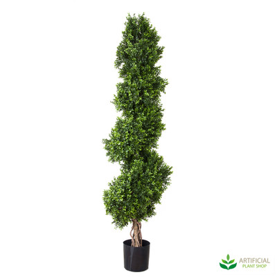 Boxwood Spiral Tree Topiary