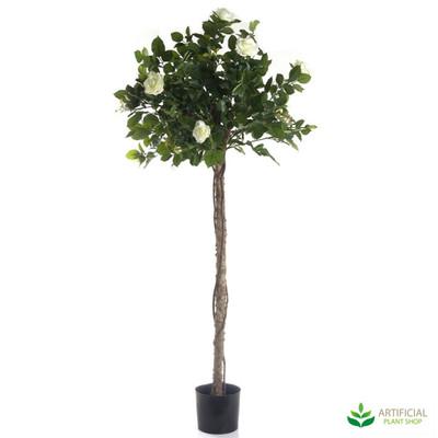 Rose Topiary 1.4m