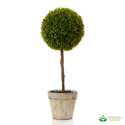 Boxwood Topiary 60cm in pot