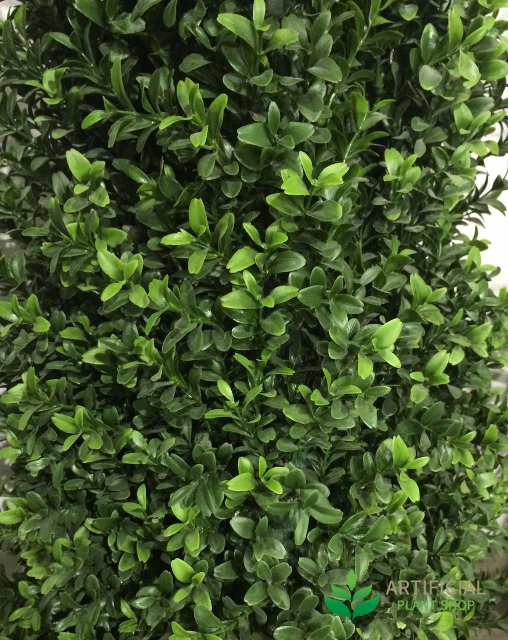 Boxwood Pyramid tree leaves