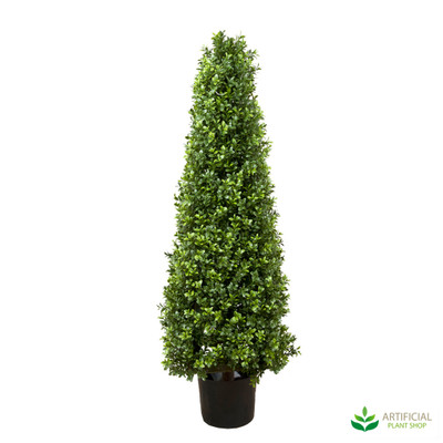 Boxwood Pyramid Tree 1m