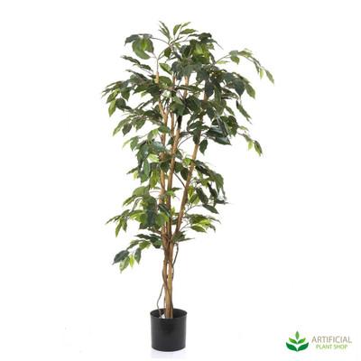 Ficus Tree 1.2m