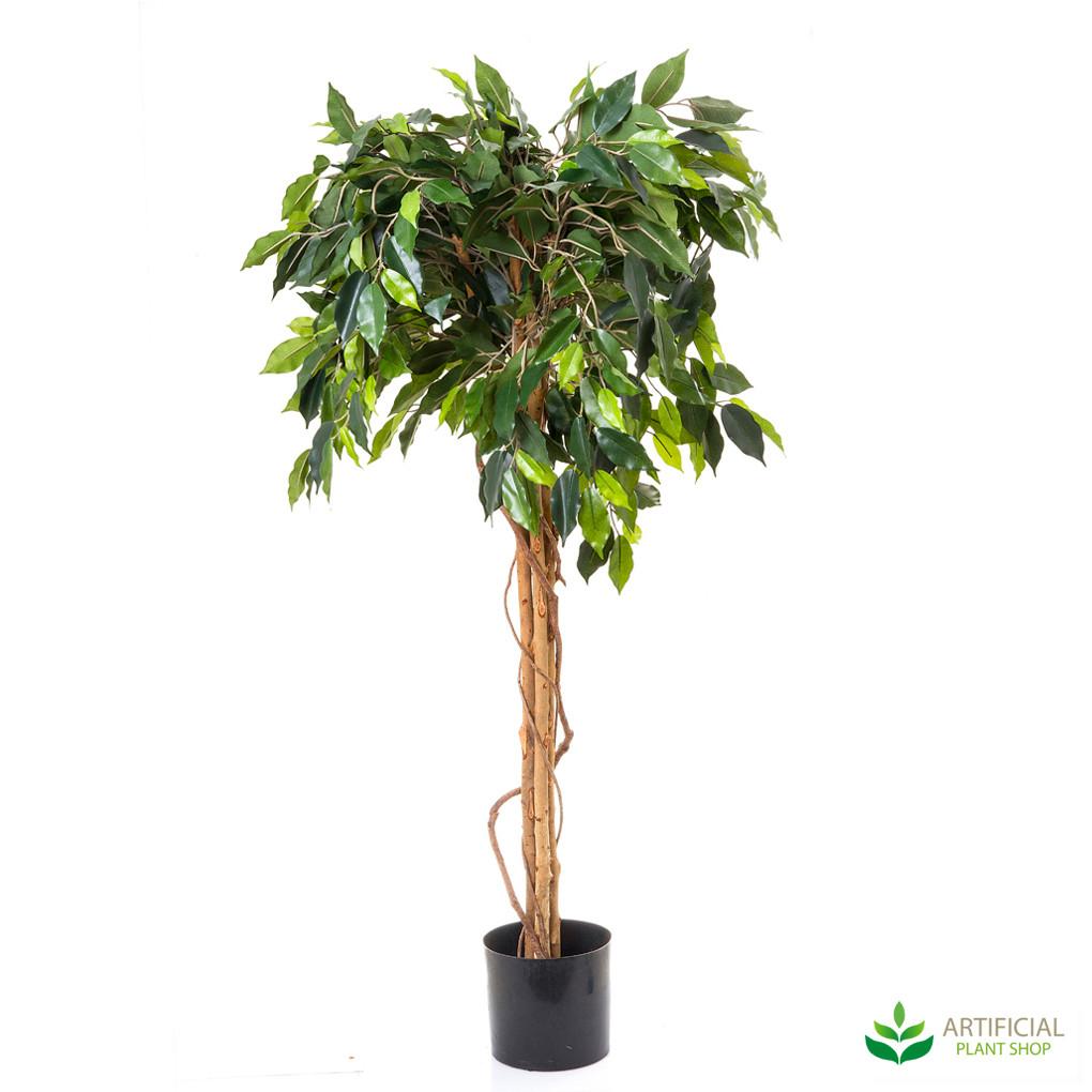 Ficus Ball Tree 1.2m