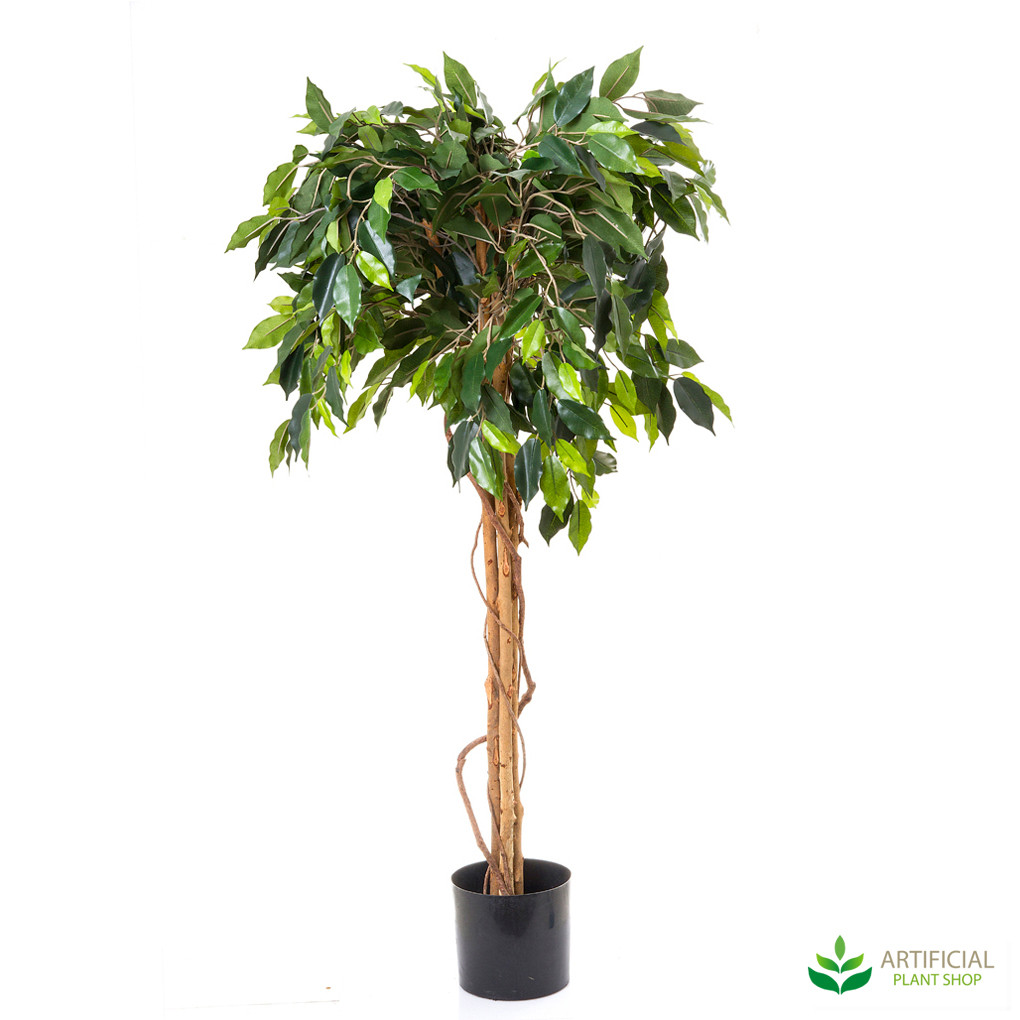 Ficus Ball Tree 1.2m
