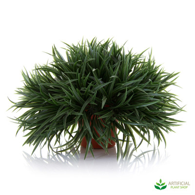 Mondo Grass Green in pot 18cm (set of 4)