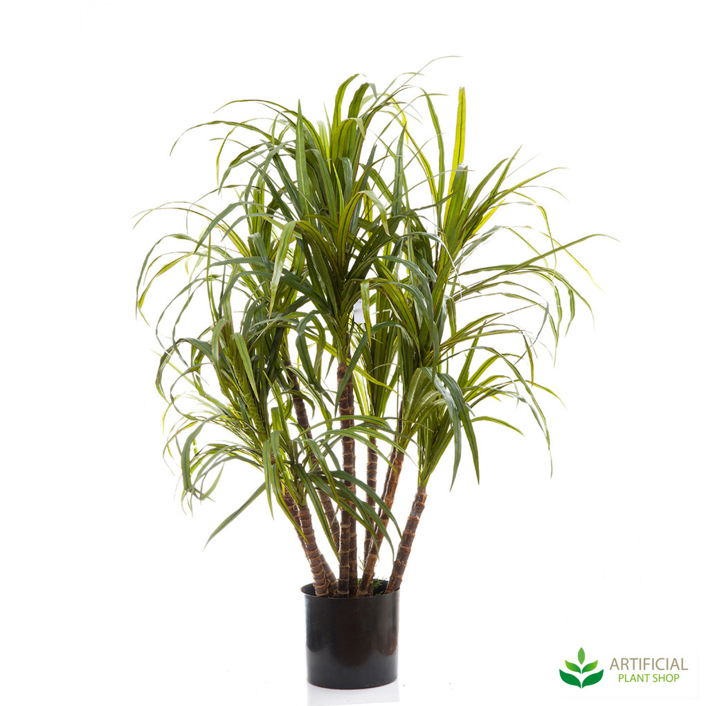 Dracaena Marginata Tree 1.3m