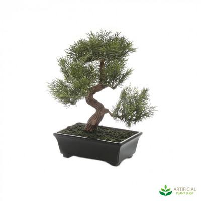 Bonsai Tree 25cm potted