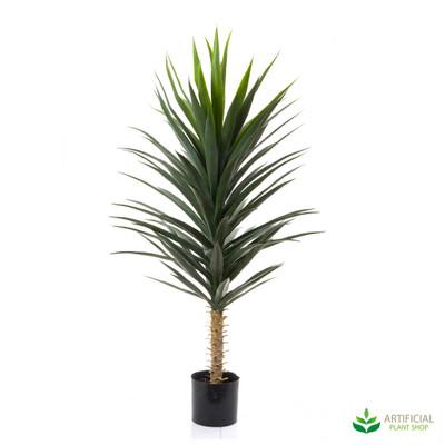 Yucca Tree 1.3m