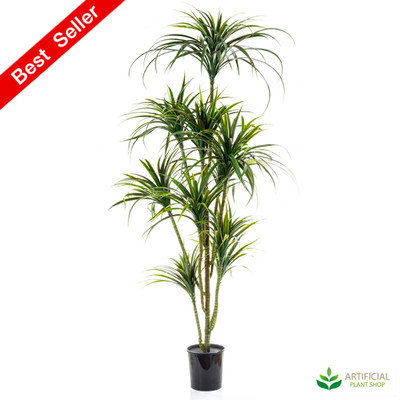 Yucca Tree 1.8m with pot
