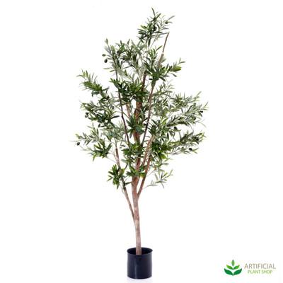 Olive Tree 1.5m