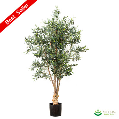 Premium Olive Tree 1.5m