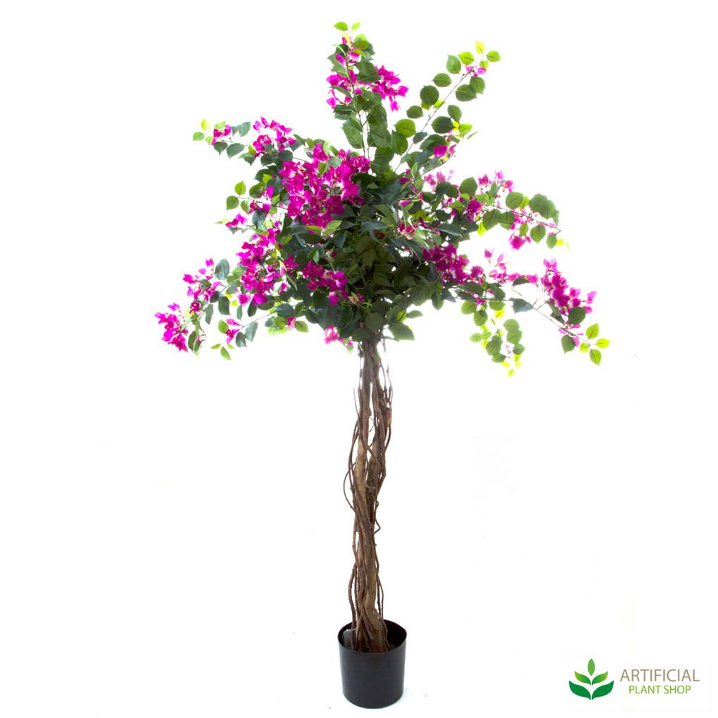 Bougainvillea Tree 1.6m