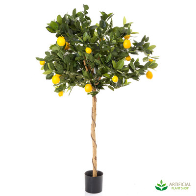 Golden Lemon Tree 0.9m
