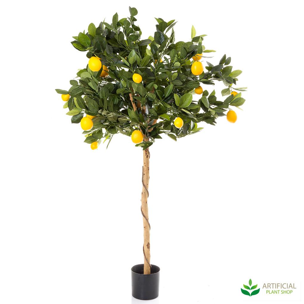Golden Lemon Tree 0.9m