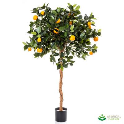 Orange Tree 0.9m