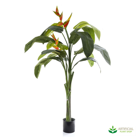 Heliconia Plant 1.6m