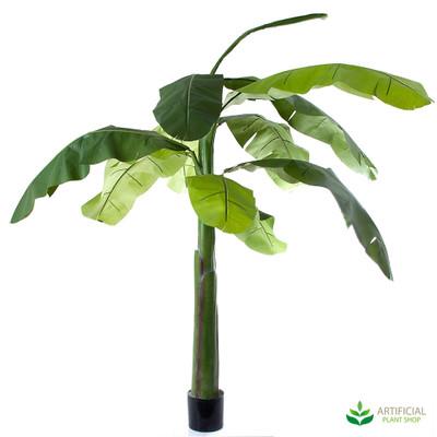 Banana Tree 1.5m