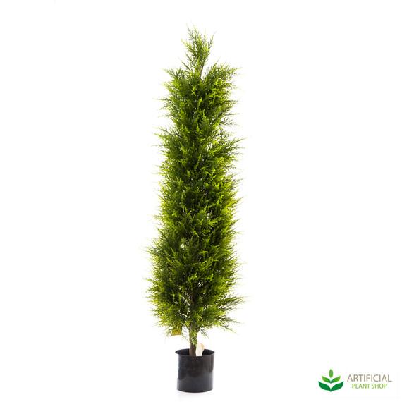 Cypress Pine Tree 1.5m