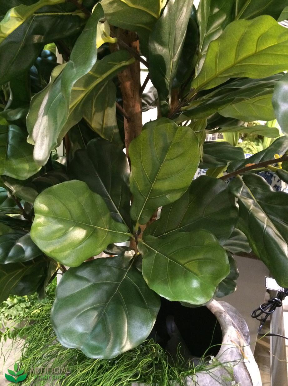 Fiddle Leaf Fig Tree Leaves