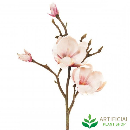 Magnolia Pink 60cm