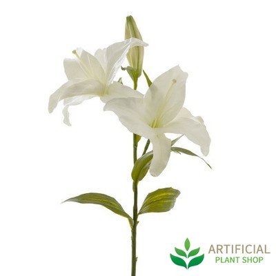 Casablanca White Lily 80cm (bundle of 6)