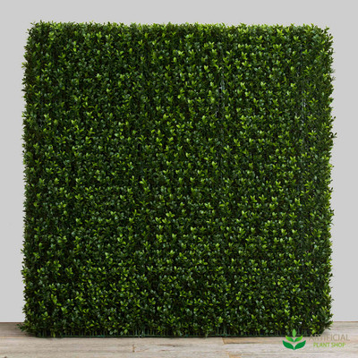 Boxwood Hedge 93cm x 100cm