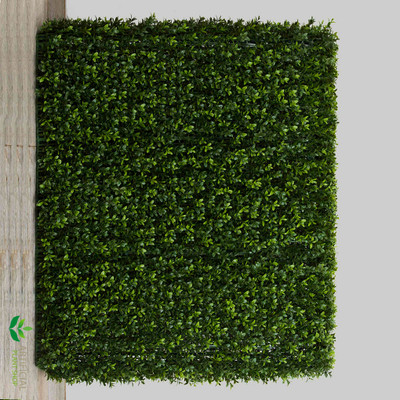 Boxwood Hedge 75x100