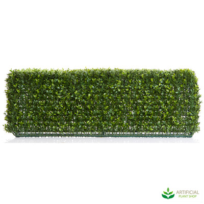 Boxwood Hedge 25cm x 95cm