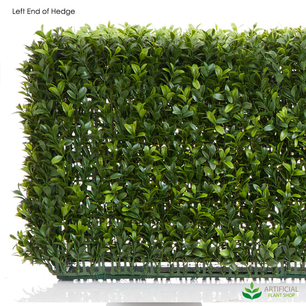 Boxwood hedge frame