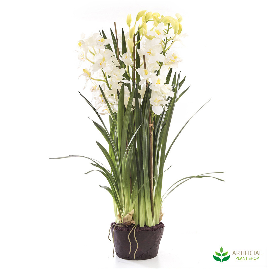 White Orchid 1.1m with paper pot