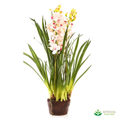 Light Pink Orchid 1.1m with paper pot