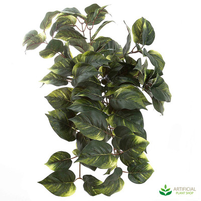 Hanging Pothos Bush 70cm (pack of 6)