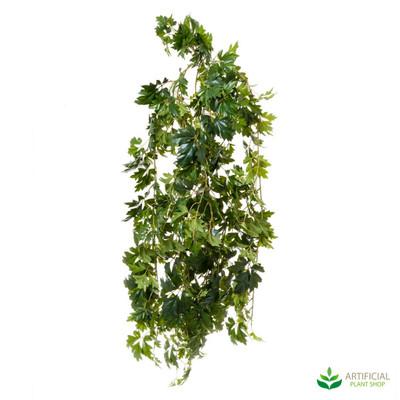 Cissus Bush 1.1m