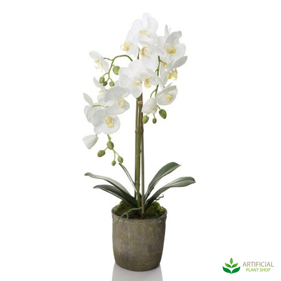 White Orchid in Terracotta Pot 70cm