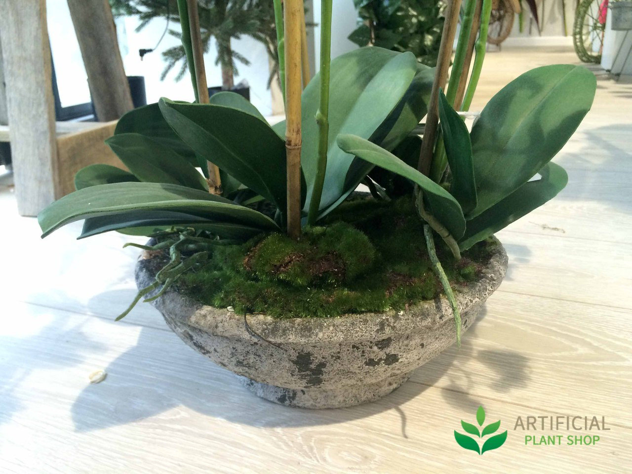 Orchid base in round pot