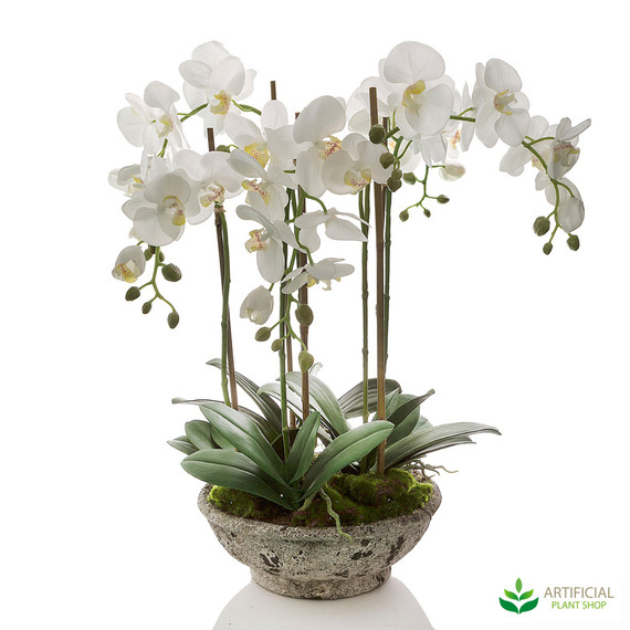 White Orchids in Round Pot 65cm