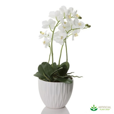 White Orchid in White Pot 60cm