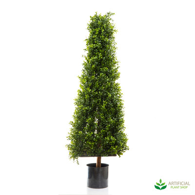 Boxwood Pyramid Tree 1.15m