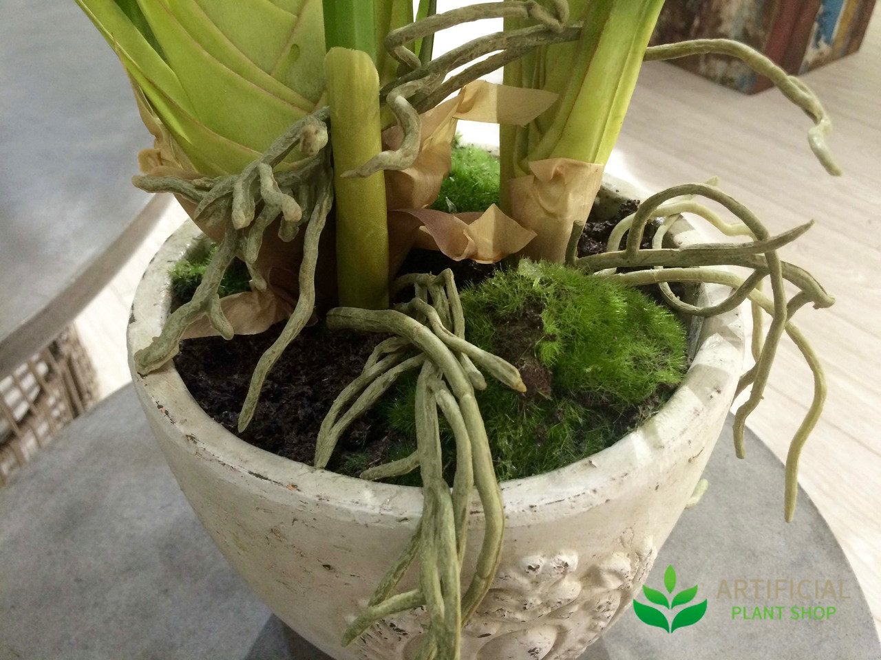 Cymbidium Orchid Base