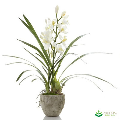 Cymbidium Orchid White in Pot 80cm