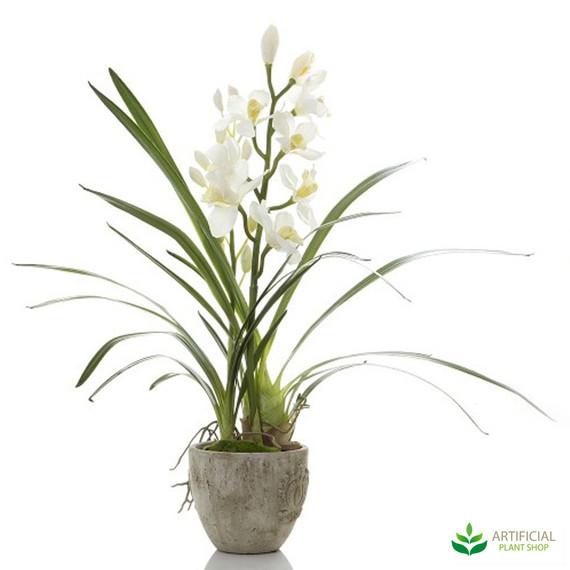 Cymbidium Orchid White in Pot 80cm