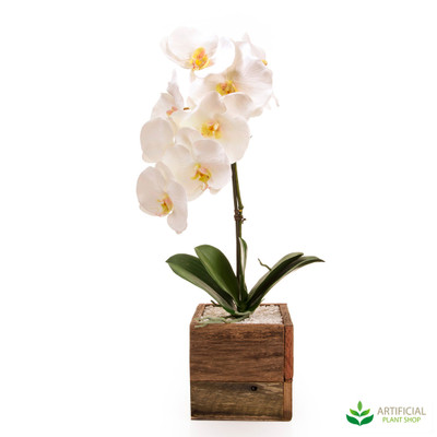 White Orchids in Timber Box 60cm