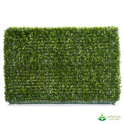 Boxwood Hedge 95cm x 55cm