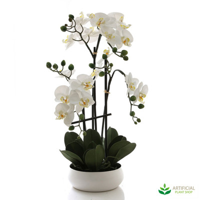 White Orchid in White Bowl 60cm