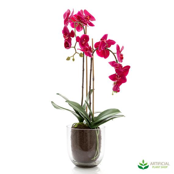 Orchid Fuchsia in Glass Vase 80cm