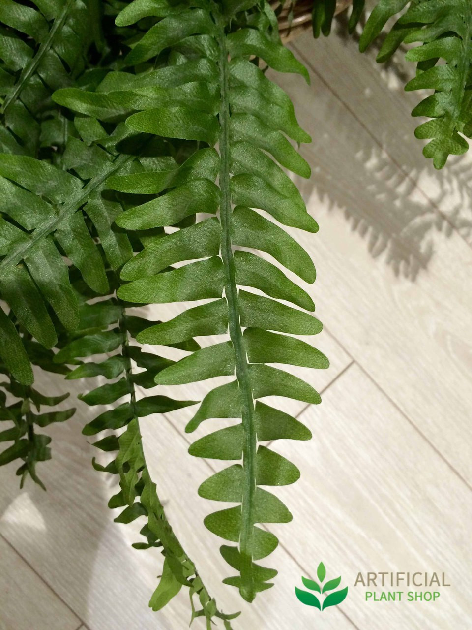 Boston Fern leaf