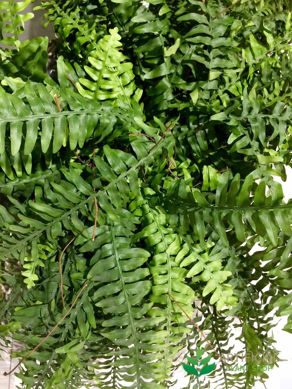 Artificial Boston Fern Leaves