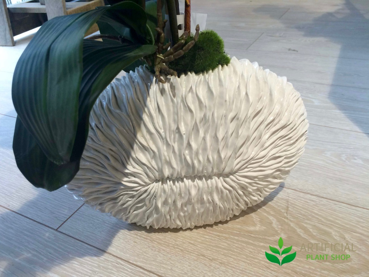 Shell Vase for artificial Orchid